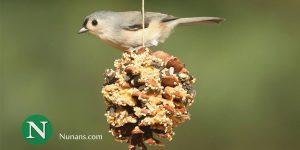 Nunans Birds
